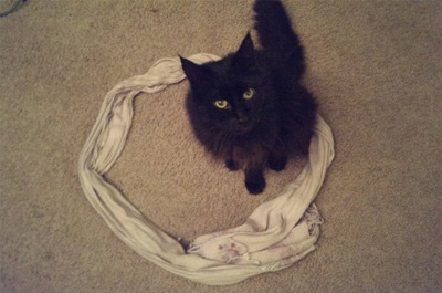 スカーフの猫ホイホイに入る猫