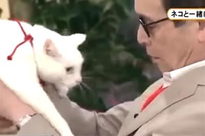 タモリさんと白猫
