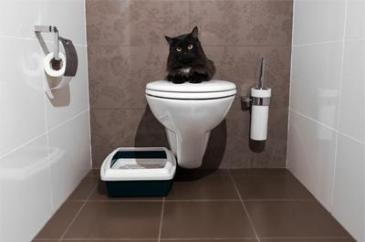 トイレを陣取る猫
