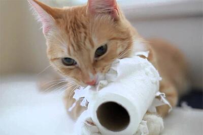 トイレットペーパーを食べる猫
