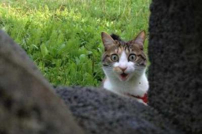 ドキドキしている猫