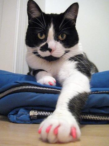 ネイルキャップを付けた猫