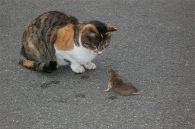 ネズミを見つめる野良猫