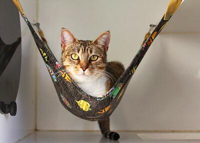 ハンモックでくつろぐ猫