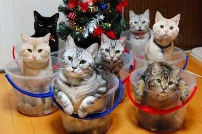 バケツに入ったたくさんの猫
