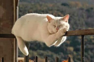 バランスを保ちながら寝る猫