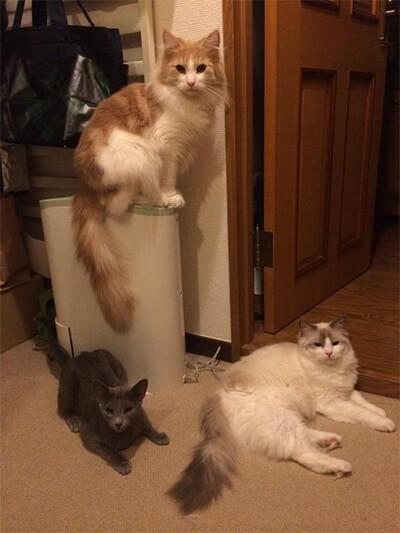 パンサー管の飼い猫たち