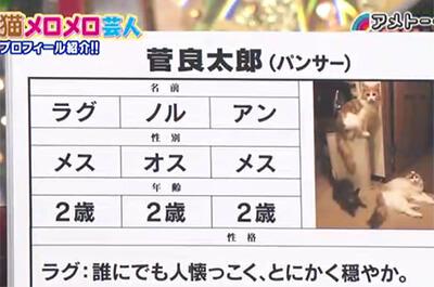 パンサー管の飼い猫のプロフィール