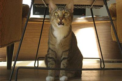 フレーメン反応で飼い主を見る猫