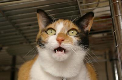 フレーメン反応をする猫