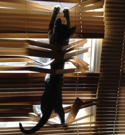 ブラインドにぶら下がる猫