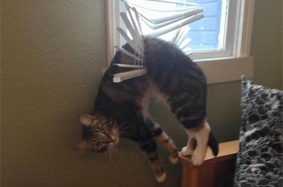 ブラインドに引っ掛かった猫