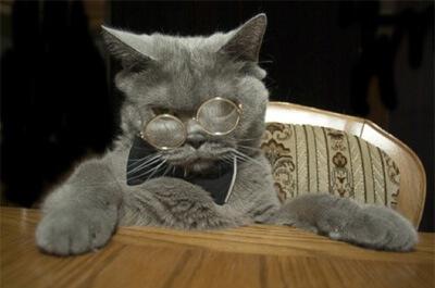 メガネを掛けたブリティッシュショートヘア