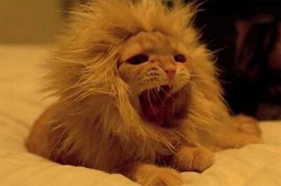 ライオンに似せた猫