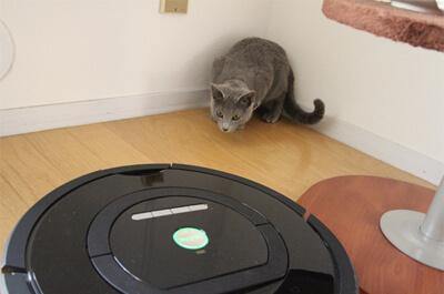 ルンバを警戒する猫