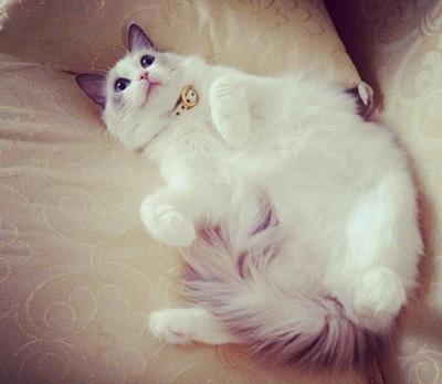 ローラの愛猫のテト
