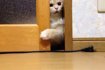 一人でドアを開ける猫