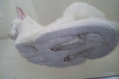 下から見る猫の座り姿