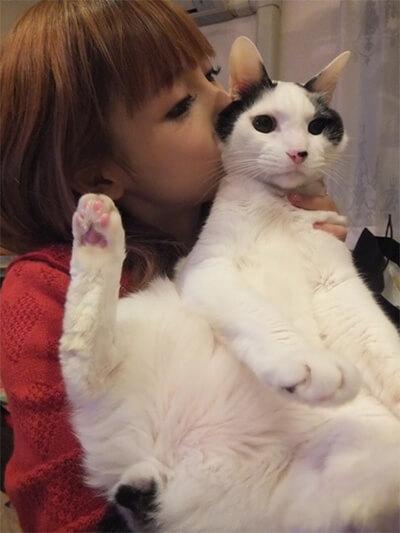 中川翔子の飼いの猫ちび太
