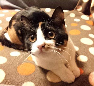 中川翔子の飼い猫つくし