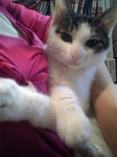 中川翔子の飼い猫らいティン