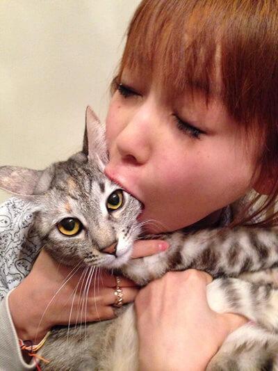 中川翔子の飼い猫ショコラ