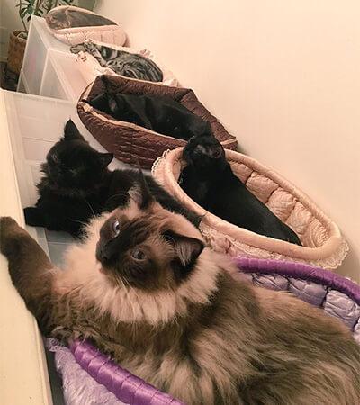 前田敦子の実家の猫たち