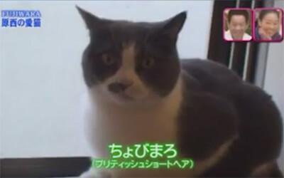 原西の飼い猫ちょびまろ