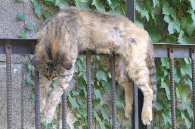 夏バテする猫