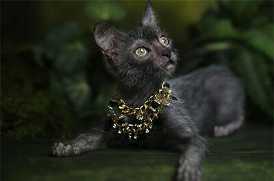 外でくつろぐ猫のリコイ