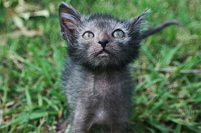 外を散歩する猫のリコイ