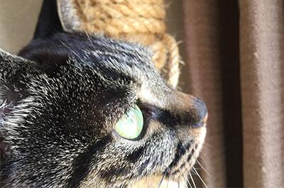 外を見つめる飼い猫