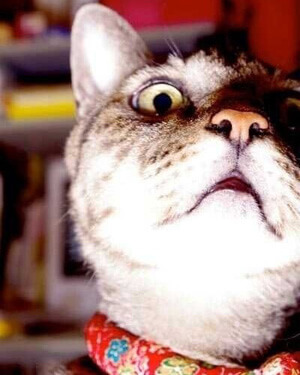嫉妬したように見える猫