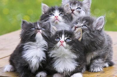 子供のペルシャ猫達