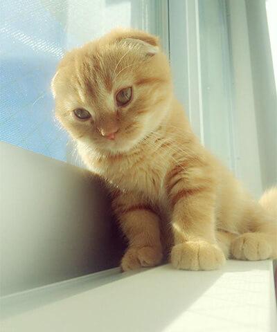 宮脇咲良の愛猫のまるちゃん