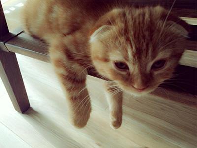 宮脇咲良の愛猫