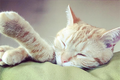 寝ているミコライオ