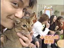 小池栄子の猫と映る長瀬智也
