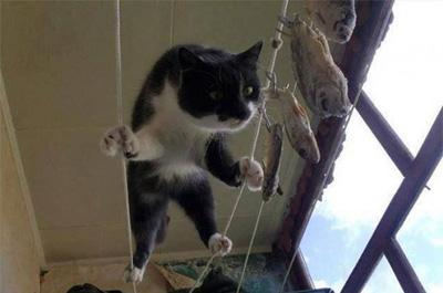 干物の魚を狙う猫