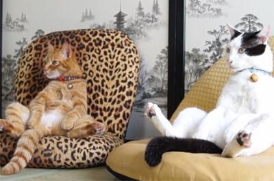 座いすでくつろぐ猫
