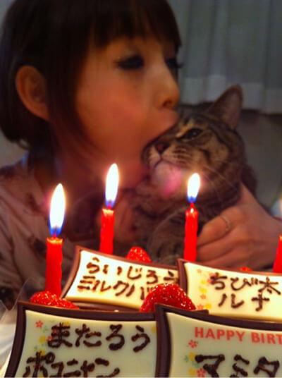 愛猫の誕生日を祝うしょこたん