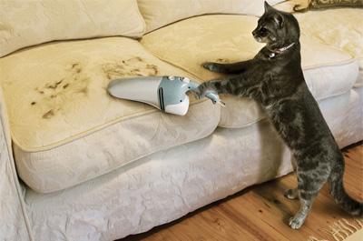 掃除機を掛ける猫