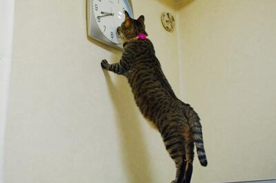 時間が気になる猫