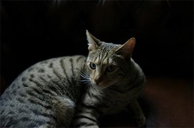 松田翔太の愛猫ロッシ