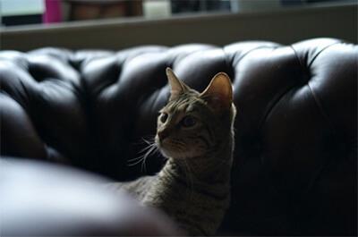 松田翔太の飼い猫ロッシ