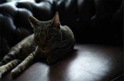 松田翔太の飼い猫