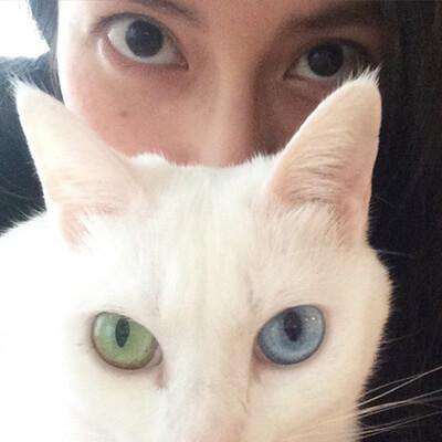 柴咲コウとオッドアイの猫