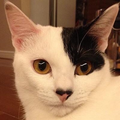 柴咲コウの愛猫るな