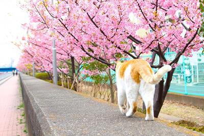 桜の木の下を散歩する猫