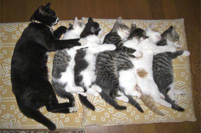 横一列に並んで寝る猫